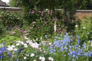 2012-06-19 Mottisfont rose garden5