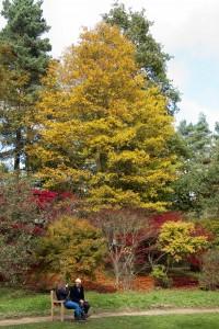 2012-10-27 Batsford Arboretum11
