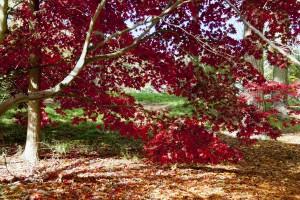 2012-10-27 Batsford Arboretum16