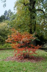 2012-10-27 Batsford Arboretum2