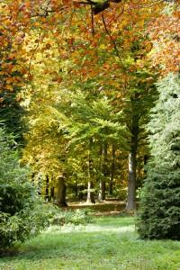 2012-10-27 Batsford Arboretum22