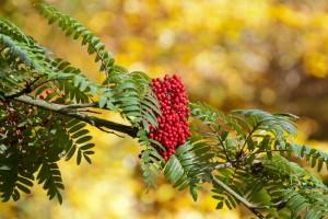 2012-10-27 Batsford Arboretum25