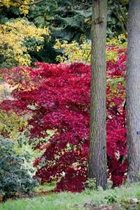 2012-10-27 Batsford Arboretum26