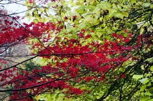 2012-10-27 Batsford Arboretum28