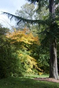 2012-10-27 Batsford Arboretum3