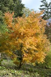 2012-10-27 Batsford Arboretum32