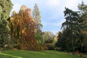 2012-10-27 Batsford Arboretum33