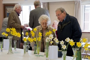 2013-04-06 CGC show daffodils1