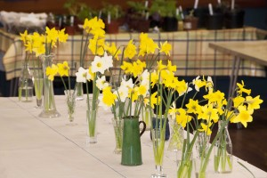 2013-04-06 CGC show daffodils2