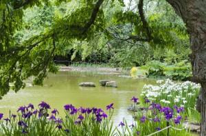 2013-07-04 Cliveden Water Garden2
