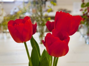 2015-04-18 CGC Spring Show5