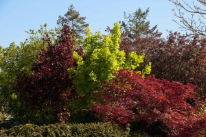 2012-05-26 Cumnor Gardens10[11]