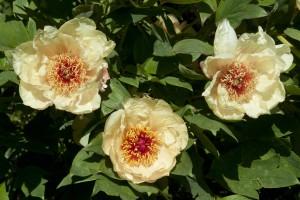 2012-05-26 Cumnor Gardens13[9]