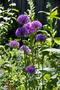2012-05-26 Cumnor Gardens1[6]