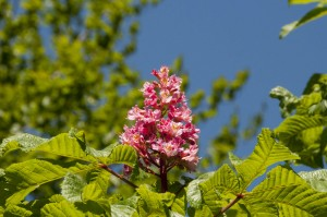 2012-05-26 Cumnor Gardens4[3]