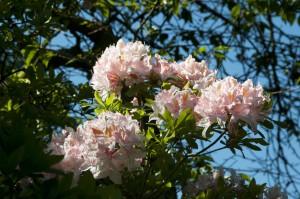 2012-05-26 Cumnor Gardens6[2]