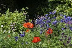 2012-05-27 Cumnor Gardens17[8]