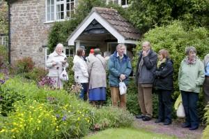 2015-06-01 Chiffchaffs garden tea