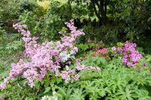 2015-06-01 Chiffchaffs garden5