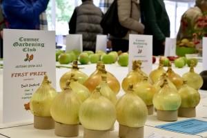 2015-09-05 CGC Show onions