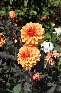 2015-09-15 The Vyne walled garden3
