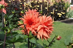 2015-09-15 The Vyne walled garden5