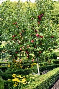 2015-09-15 West Green House walled garden6