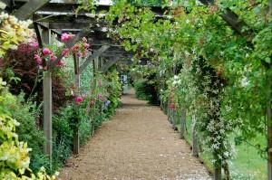 2015-06-15 Open Gardens8