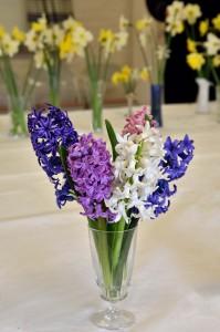 2016-04-02 Hyacinths