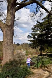 2016-04-14 Wisley rock garden2red