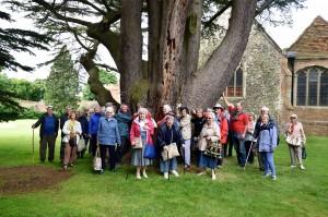 2016-06-14 Lullingstone Castle cedar tree hug