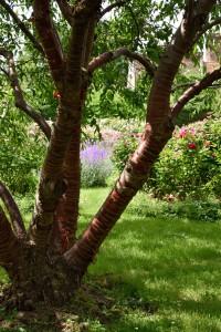 2016-06-15 Borde Hill Rose Garden3