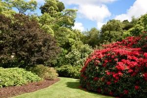 2016-06-15 Wakehurst Place Garden2