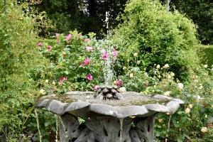 2016-06-17 Nymans Rose Garden