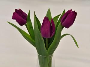 2018-04-07 Purple tulips