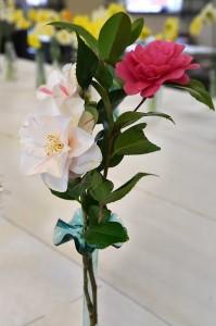 2019-04-06 Camellias