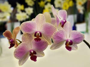 2019-04-06 Orchid