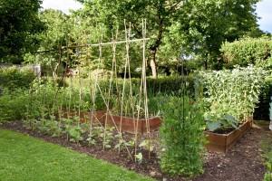 Vegetable area1