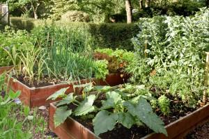 Vegetable area3